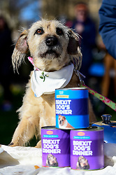 "© Licensed to London News Pictures. 10/03/2019. LONDON, UK. A dog in Victoria Park Gardens, next to the Houses of Parliament, for ""Brexit is a Dog's Dinner"", a protest to urge MPs to vote to ensure that a no-deal Brexit is avoided and to give the people of the UK a final say.  Next week, there will be a series of up to three votes in the House of Commons where MPs will vote on whether to accept Theresa May's Brexit deal.  Photo credit: Stephen Chung/LNP"