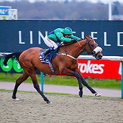 Elysian Prince - Liam Jones wins<br /> The Coral Handicap<br /> Lingfield Park<br /> 17/2/16.<br /> ©Cranhamphoto.com