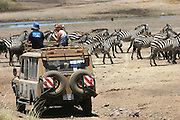 Africa, Tanzania, Serengeti National Park annual migration of over one million white bearded (or brindled) wildebeest and 200,000 zebra. Safari tourists watching the herd Spring April 2007