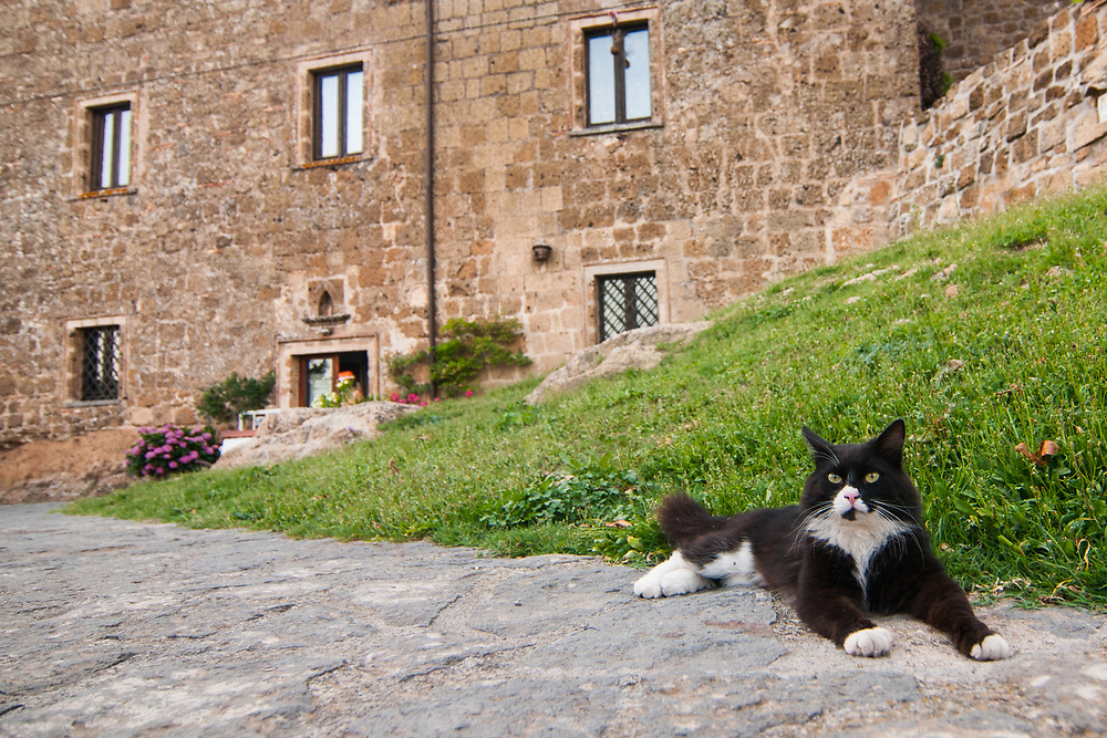 A cat rest in the village of Civita di Bagnoregio.<br /> Civita di Bagnoregio is a town in the Province of Viterbo in central Italy, a suburb of the comune of Bagnoregio, 1 kilometre (0.6 mi) east from it. It is about 120 kilometres (75 mi) north of Rome. Civita was founded by Etruscans more than 2,500 years ago. Bagnoregio continues as a small but prosperous town, while Civita became known in Italian as La citt&agrave; che muore (&quot;The Dying Town&quot;). Civita has only recently been experiencing a tourist revival. The population today varies from about 7 people in winter to more than 100 in summer.The town was placed on the World Monuments Fund's 2006 Watch List of the 100 Most Endangered Sites, because of threats it faces from erosion and unregulated tourism.