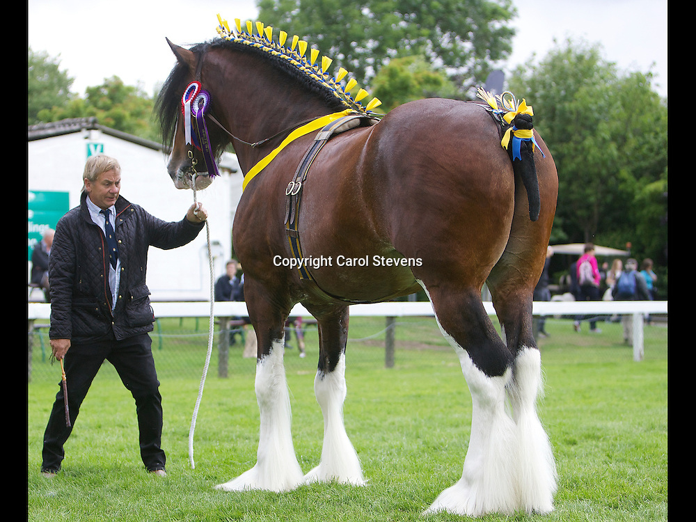 Paul Bedford's bay stallion Metheringham Upton Hamlet  6yrs   <br />