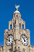 Royal Liver Building Clock tower topped with Liver Bird, Liverpool