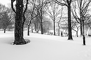 Central Park at Turtle Pond during the blizzard of 2016