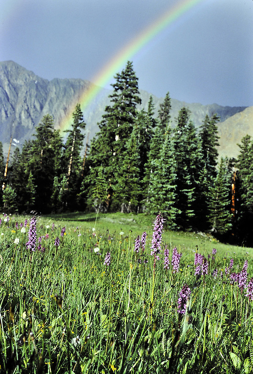 Elephanthead flowers, rainbow in the Never Summer Wilderness, Colorado