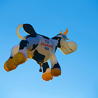 Creamland's awesome special shape balloon - the cow itself!