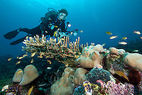 Diver and Hard Corals.Shot in West Papua Province, Indonesia