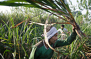 Workers harvest sugarcane in Hapur District in Uttar Pradesh, India on April 3, 2014. Uttar Pradesh is the 2nd largest sugar production state in India following Maharashtra. <br /> (Kuni Takahashi/Bloomberg)