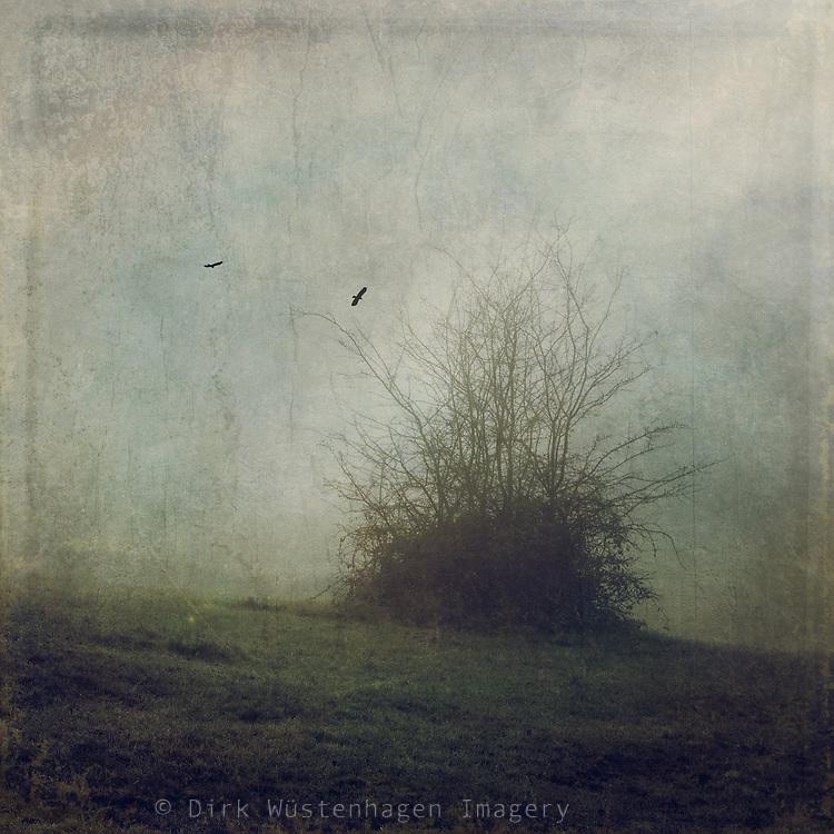 only a bush of brambles on a paddock on a misty morning...<br /> texturized photograph