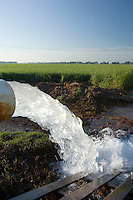 rice field being irrigated with water being pumped from the ground or local river to flood the fields
