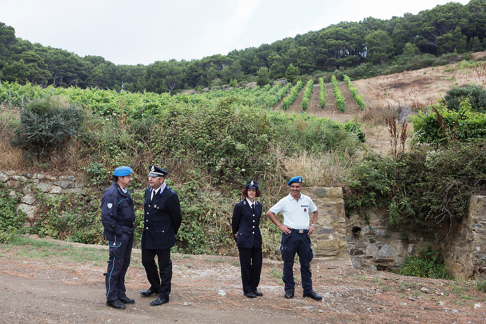 GORGONA, ITALY - 27 JUNE 2014: Prison officers are here by the one-hectare vineyard in Gorgona, Italy, on June 27th 2014.<br /> <br /> Gorgona is the smallest island of the Tuscan archipelago, located 18 miles west of Livorno, which became an experimental agricultural penal colony in 1869.<br /> <br /> The &ldquo;Frescobaldi per Gorgona&rdquo; project  provides inmates the opportunity to learn winemaking techniques and job skills under the supervision of the company&rsquo;s agronomists and winemakers, led by Vice President Lamberto Frescobaldi himself. Fifty inmates contributed to the production of Gorgona, a white wine made from Vermentino and Ansonica grapes planted on the island of Gorgona in the Tyrrhenian Sea, close to the Tuscan coast. The Frescobaldi family purchased a hectare of old vineyards and will expand with more vineyards in the upcoming months. Total production is only 2,700 bottles, but 1,000 of the bottles will reach the US market through Frescobaldi importer Folio Fine Wine Partners, in the Fall.<br /> <br /> Born in August 2012, the Gorgona initiative was financed by the Department of Penitentiary Administration and accomplished through the collaboration of the Gorgona Penitentiary's Directorate and Marchesi de&rsquo; Frescobaldi.