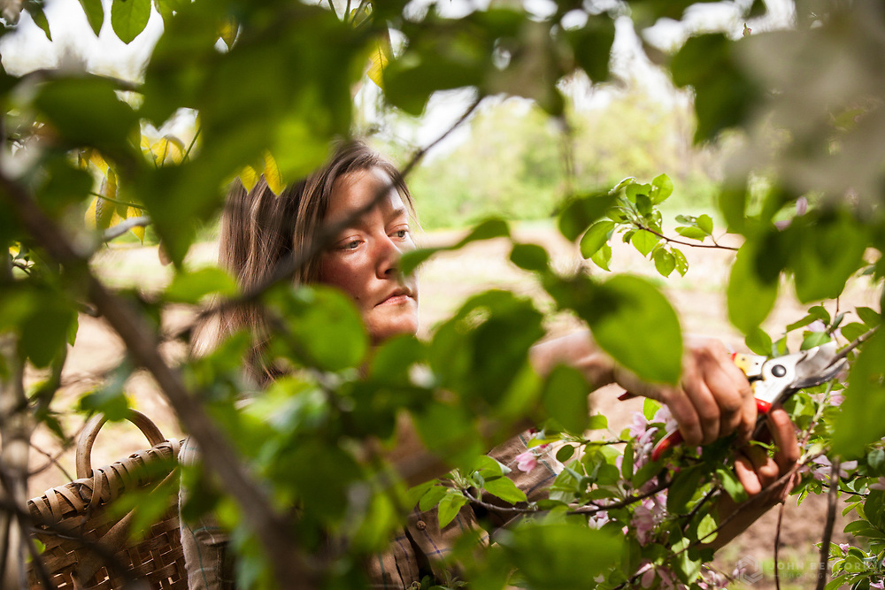 Professional forager Jenna Rozelle<br /> Client: Edible Seacoast magazine