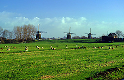 Windmills and Dikes Horizontal, Netherlands, Amsterdam, North