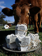 Annie Haven has developed a way to use organic manure from her cows to make a natural brew of fertilizer. Photo by John McCoy 2/8/2012