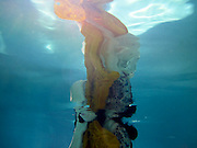 Candace Hitt, Nudes Under Water, 2012, photography based mixed media