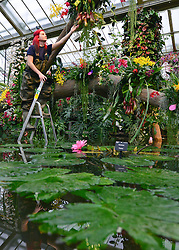 © Licensed to London News Pictures. 06/02/2014. Kew, UK. Horticulturist Ellie Blondi arranges the displays. Orchids, the first festival on Kew's 2014 events calendar showcases thousands of exotic and rare orchids. The tropical display can be viewed at The Princess of Wales Conservatory, where it's always hotter than 21°C, Kew Gardens, Saturday 8 February to Sunday 9 March 2014. Photo credit : Stephen Simpson/LNP