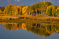 Reflections of aspen trees in Oxbow Bend on the Snake River. Grand Teton National Park.  Wyoming, USA.