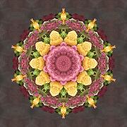 Cauliflower Mandala Kaleidoscope