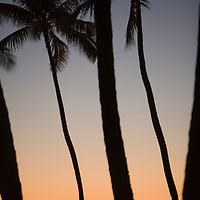 Waikiki Palm Tree shilhouettes at Dusk