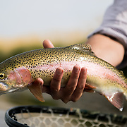 Fly Fishing Wyoming, Idaho, Montana 2018