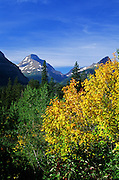 Fall foliage along the Going-To-The-Sun Road. Glacier National Park, Montana