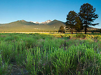 San Francisco Peaks from Bonito Meadow, Sunset Crater Volcano National Monument, Arizona