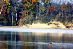 10 November 2007: Canadian Goose glides silently through the water of Lake Evergreen in Comlara Park, McLean County, Illinois