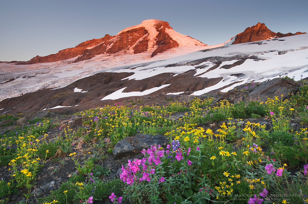 Mount Baker (elevation 10,778 feet, 3,285 m) northernmost volcano in the Cascade Range, seen from meadows of Heliotrope Ridge, Mount Baker Wilderness Washington