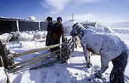 Mongolian farmer
