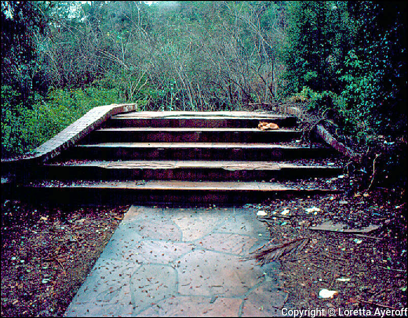 Huntington Hartford Estate, Los Angeles, CA: A large portfolio of CA Ruins was published in California Magazine, 1982. This is the director's cut.