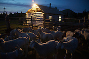 Sheep and goats rest in a barn outside Chodura village the taiga in Tuva Republic, Russia. Like many other animal herders in the republic, the Natpiool family prefers traditional farming methods but finds it difficult to compete in modern society.