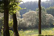 Rehbachtal bei Michelstadt zwischen Rehbach und Steinbach, Odenwald, Naturpark Bergstraße-Odenwald, Hessen, Deutschland | Rehbach valley near Michelstadt, Odenwald, Hesse, Germany
