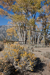 """Autumn in Nevada 1"" - This cotton wood trees,  gate, rabbit brush, were photographed in Nevada."