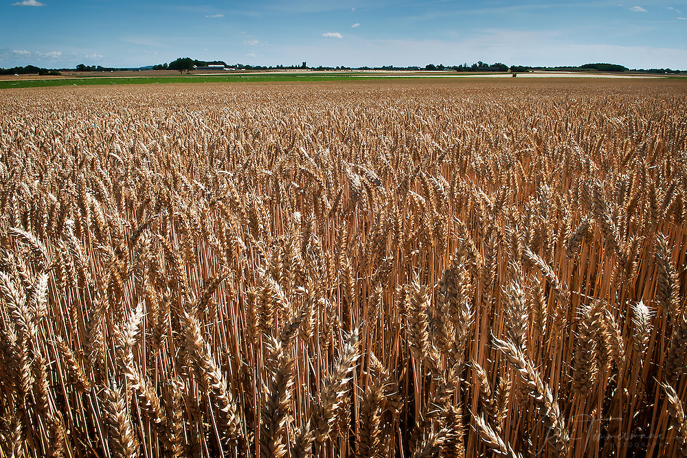 Agriculture in Skåne