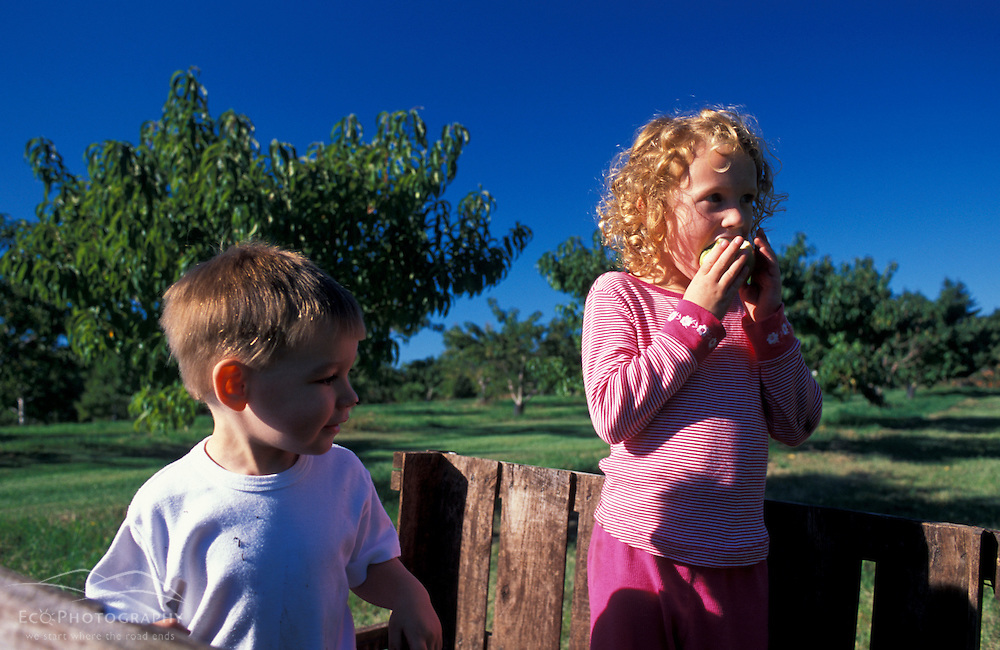 Bolton, MA. USA.  Kids enjoy a day at the Nicewicz Farm in Massachusetts' Nashoba Valley.  Apple orchard. Macintosh apples.