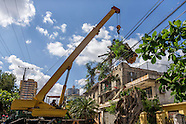 Vedado Tree Work.