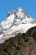 A snowy peak towers over forest in Los Glaciares National Park, Argentina.