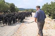 man herding his goats near Kalekoy, south<br /> coast, Turkey<br /> c. Ellen Rooney