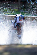 Kyle Lyman - Lup the Loop<br /> Eventing - Cross Country - Military Boekelo 2016<br /> © DigiShots