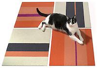 cat lying on 4 carpet squares