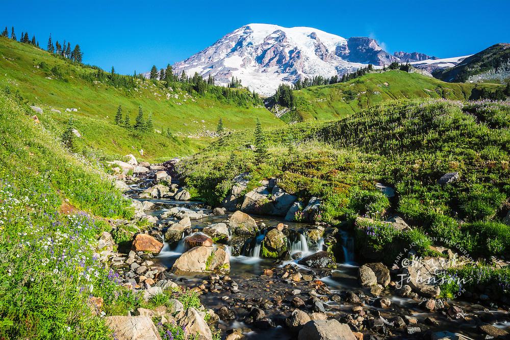 Wildflowers line the banks of Edith Creek, Mt. Rainier in the background, Mt. Rainier National Park, Washington, USA