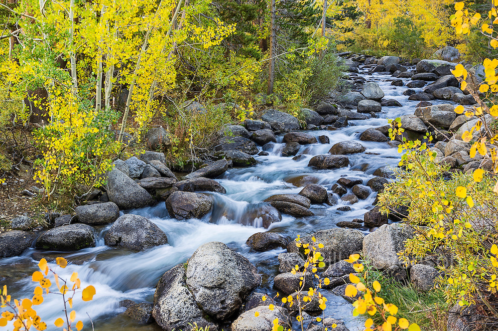 A photo of Bishop Creek flowing through yellow aspen trees in the Sierra mountains of California.
