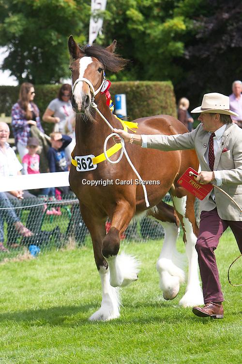 Mr Walt Bedford's bay colt Deighton Emperor<br /> 1 year old<br /> Sire  Sladbrooke Benefactor<br /> Winner  Yearling Filly, Colt or Gelding Class