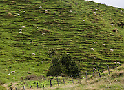"Sheep trails on a steep hillside, on the Stratford to Taumarunui ""Forgotten World Highway"", North Island, New Zealand"