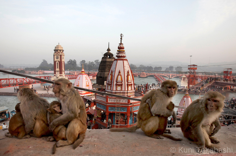 Monkeys gather near temples along Ganges River during Kumbh Mela in Haridwar, northern India on January 2010. Hindus believe that bathing in the Ganges during the festival, the largest Hindu gathering in the world, cleanses them of sin.Photo by Kuni Takahashi