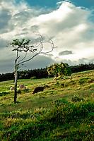 Ranch near Waipio Valley, HI.  Copyright 2008 Reid McNally.