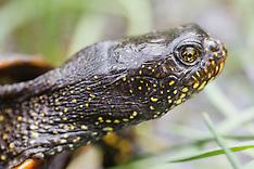 Reptielen, Reptiles, Reptilia