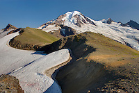 Mount Baker (elevation 10,778 feet (3,285 m) seen from Chowder Ridge, Mount Baker Wilderness Washington USA