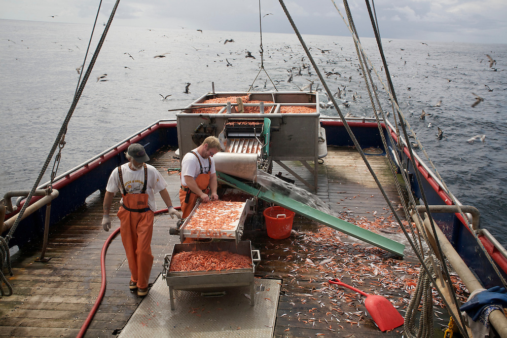 Crew members Gary Batchelder and Brad Burton sort the morning's catch