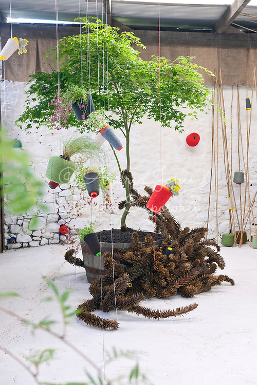 'Ikebana' plant/art installation by Brian Young and Alasdair Currie
