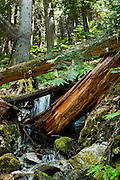A tributary of Thunder Creek flows under trunks of old growth trees along the trail to Fourth of July Pass from Colonial Creek Campground, in Ross Lake National Recreation Area, in the North Cascades mountain range, Washington, USA. The best view is a mile short of the Pass, at Fourth of July Camp, 9 miles round trip with 2000 feet gain.